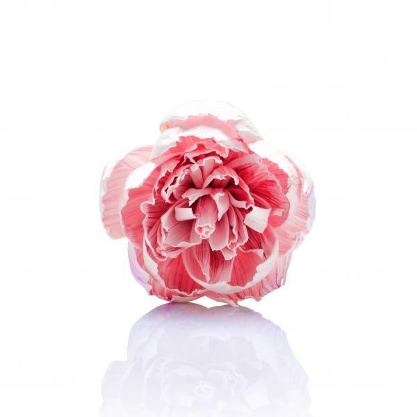 Vogel Frei - Diffusing Flower - Duftblume - Peony - weiß/pink