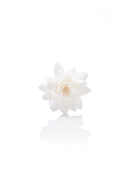 Vogel Frei - Diffusing Flower - Duftblume - Lotus - Natur